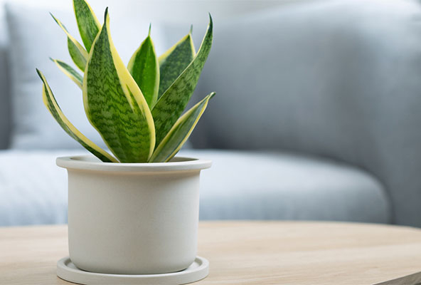 A simple house plant sitting on a small living room table